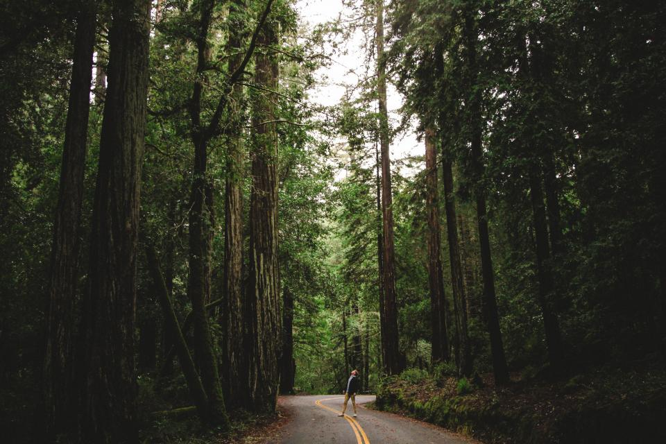 people man travel adventure alone nature trees road woods forest green leaves autumn fall trek