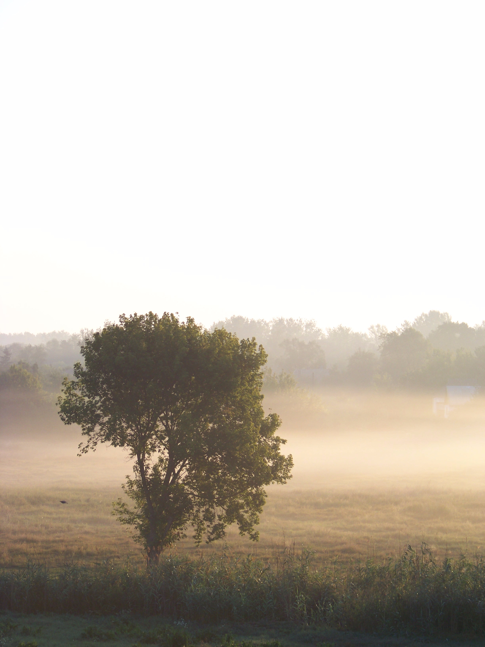 fog morning summer dawn ukraine trees forest grass nature