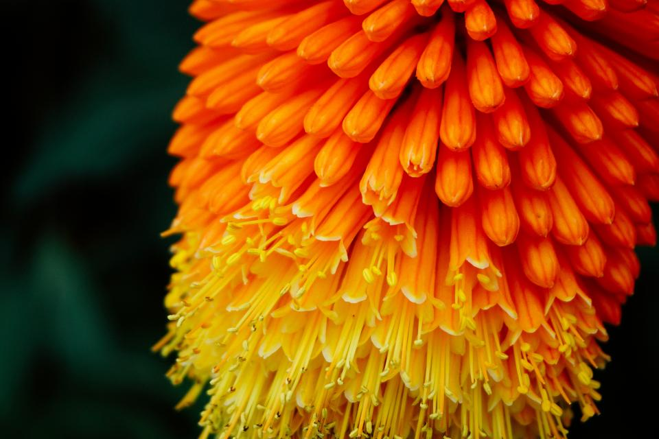 yellow orange flower bloom plant nature