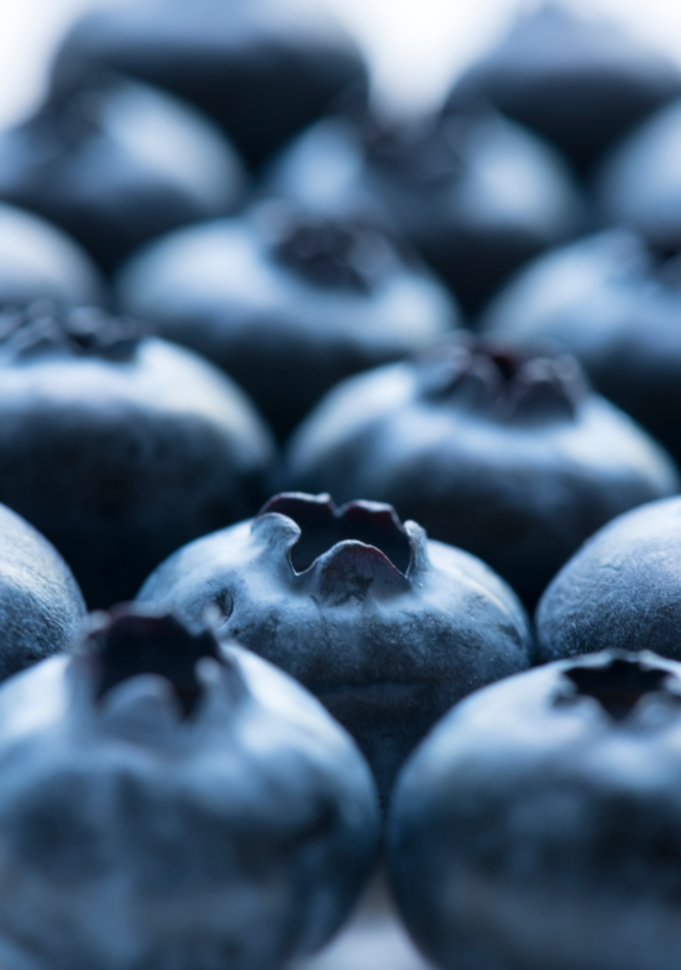 background berry blue blueberry closeup delicious dessert detox diet energy food fresh freshness fruit healthy ingredient juicy macro natural nature nutrition nutritious organic pattern raw refreshment ripe season