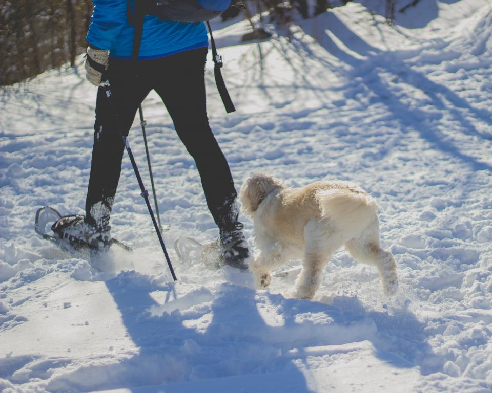 people man guy snow winter snowshoe footwear travel walk hike trek adventure white dog pet animal friend outdoor sunny shadow