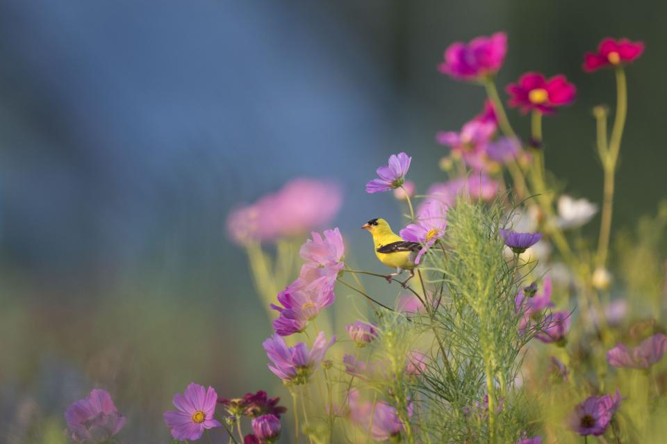 animals birds beautiful gorgeous perched plants flowers branches stems stalks outdoors still bokeh yellow purple