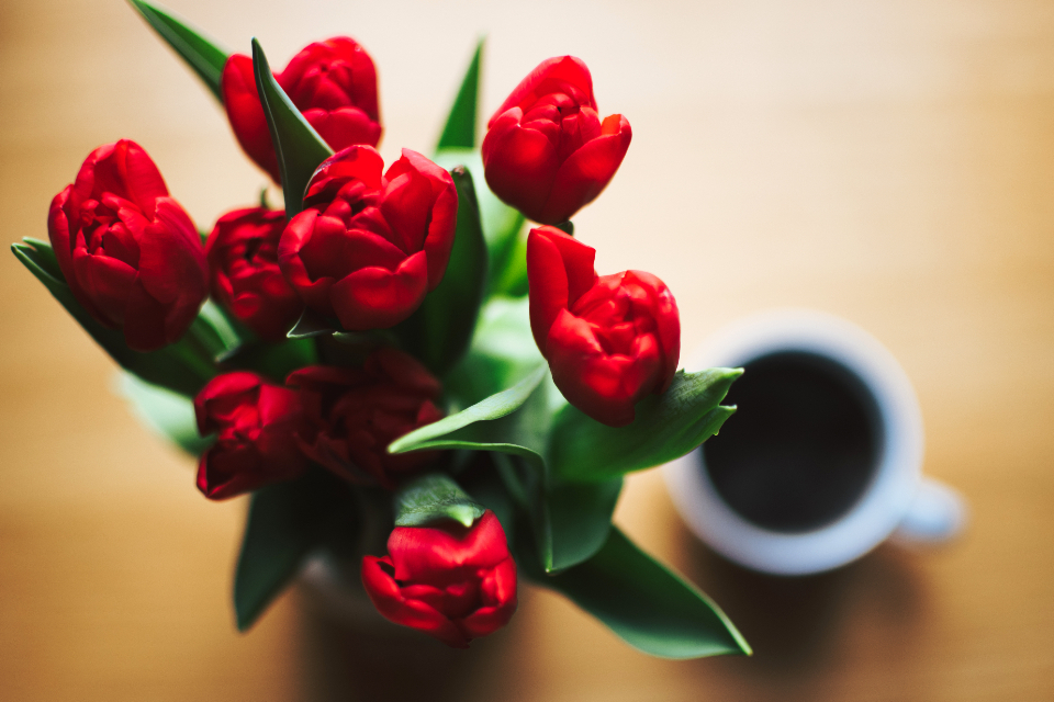 red tulip coffee overhead view black drink food nature love