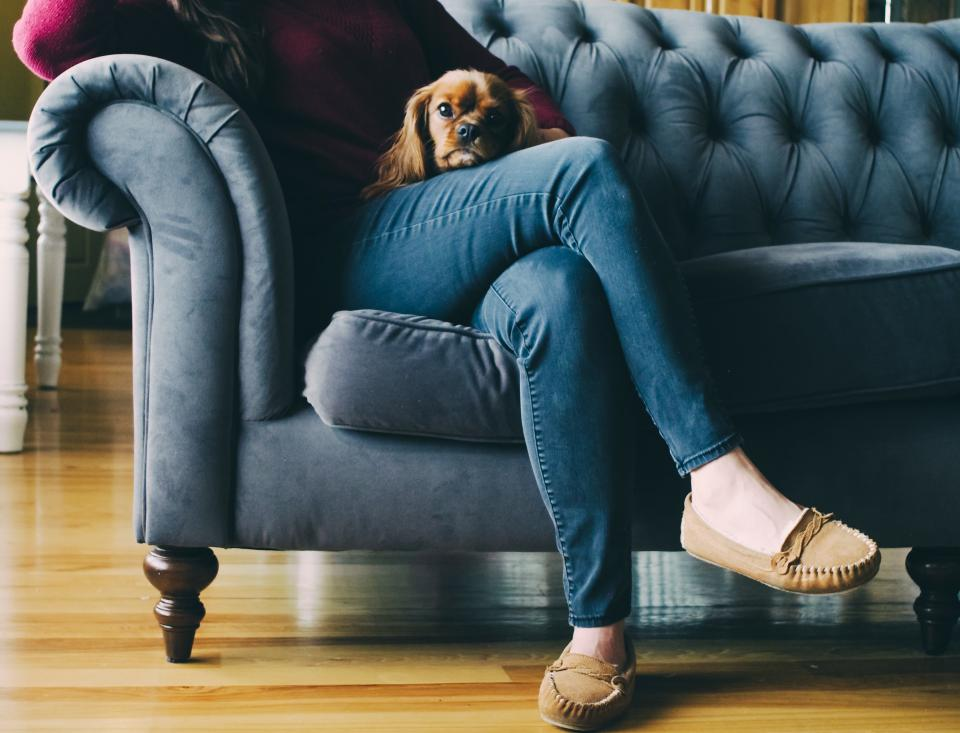 couch feet shoes wooden floor dog puppy brown sofa jeans woman lady girl pet living room