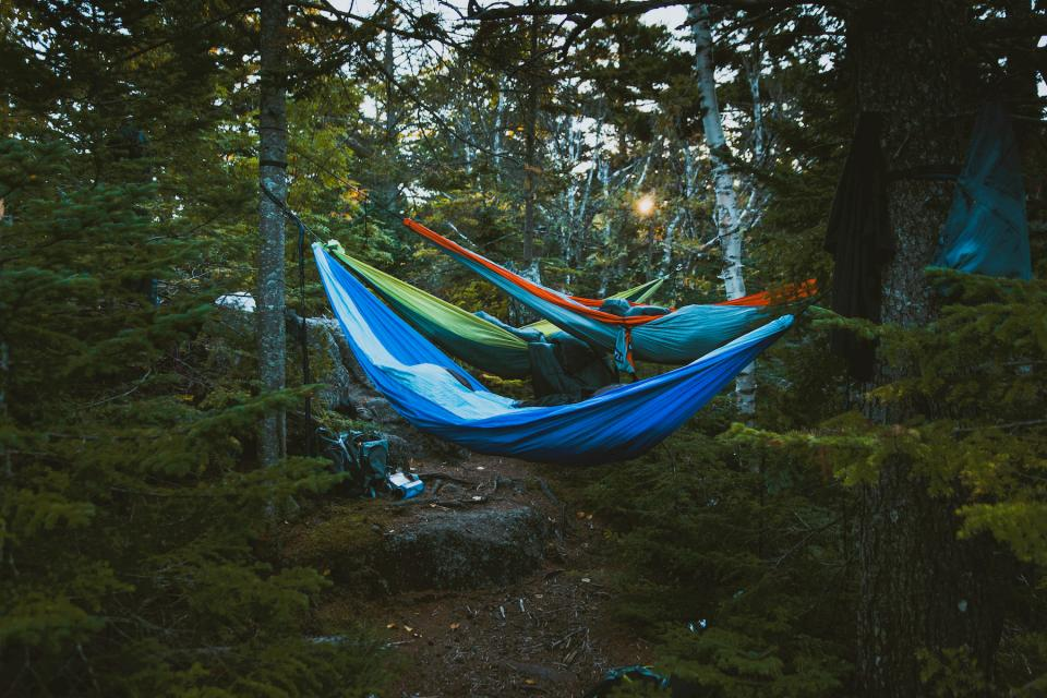nature landscape trees woods forest hammocks camping travel