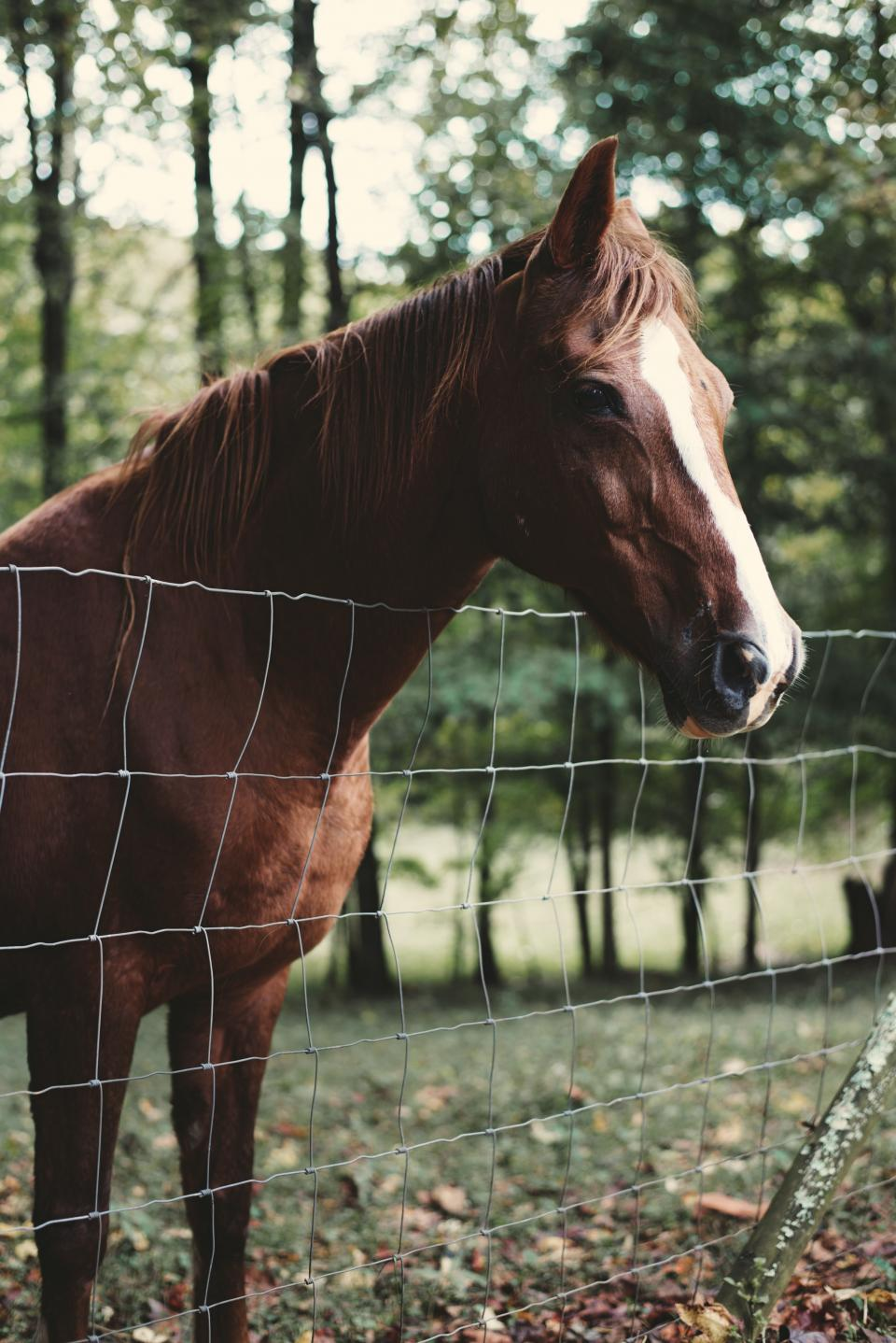 horse animal close up brown trees grass leaves autumn fall fence