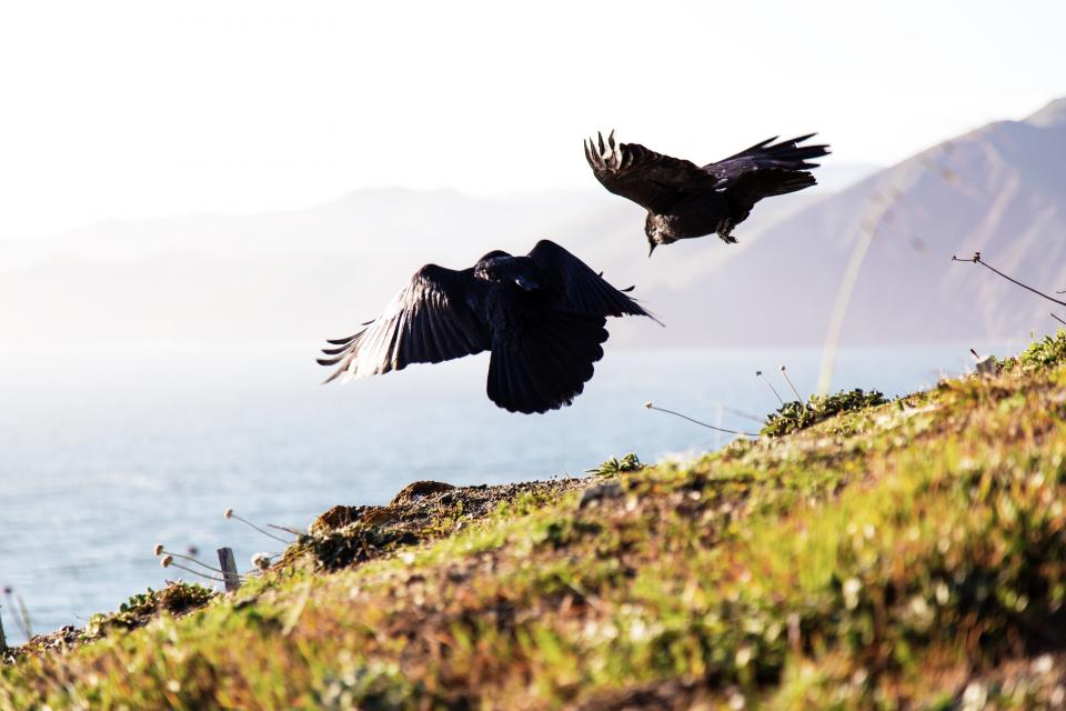 green grass blur highland mountain sea water sunny day bird animal flying