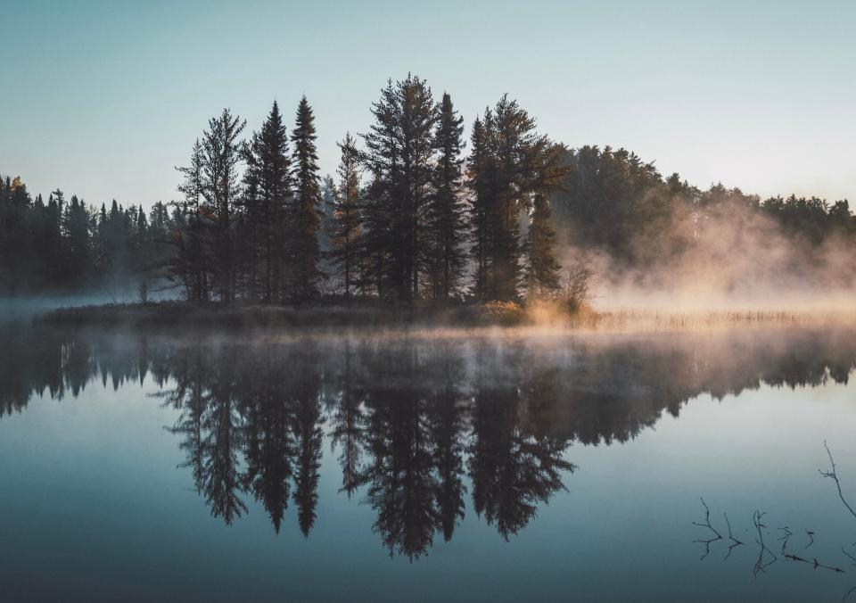 trees plants nature fog cold lake water reflection sky