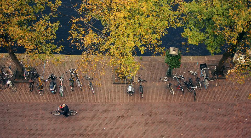 bikes bicycles guy man people cyclist trees leaves fall autumn cobblestone street sidewalk city urban
