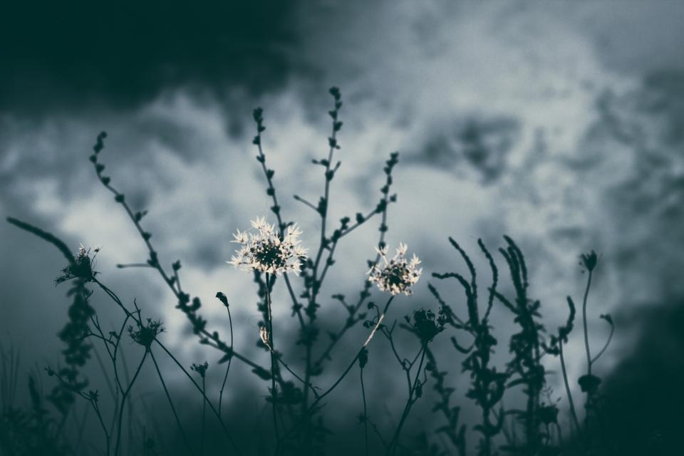 nature plants dark sky flowers
