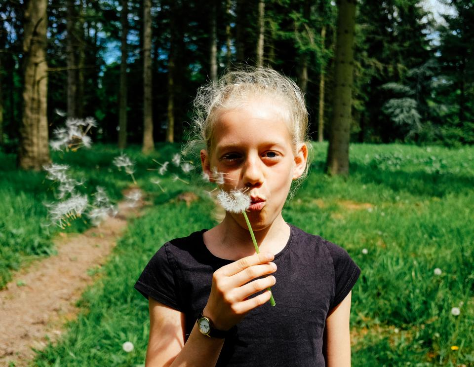 dandelion flower plant nature blow stem green grass field trees plant people kid girl child