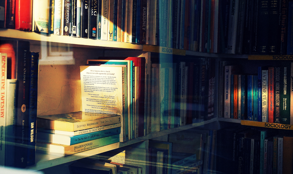 books bookshop bookshelf reading sunlight library bookshelves