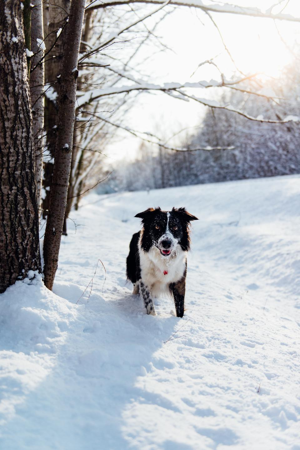 dog animal pet puppy snow winter trees plants nature outdoor sunny day
