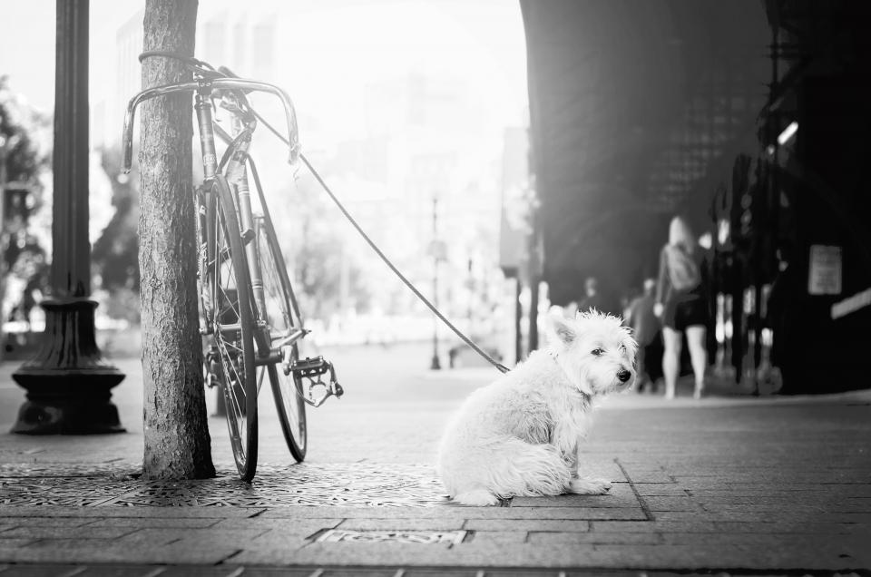 street people walking animals dog leash black and white monochrome grayscale