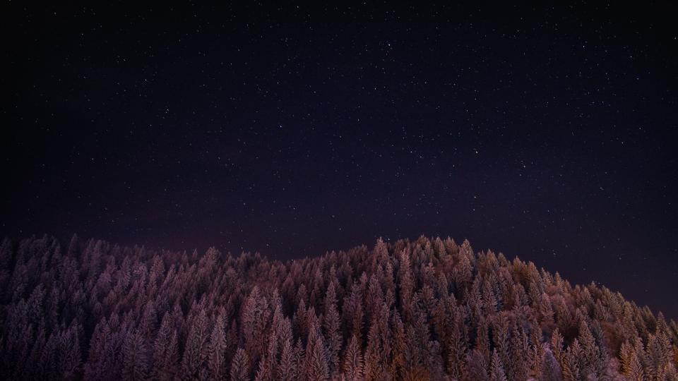 dark night sky stars trees plant nature forest
