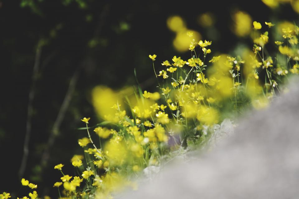 flowers nature blossoms branches bed field stems stalk petals leaves yellow bokeh outdoors garden