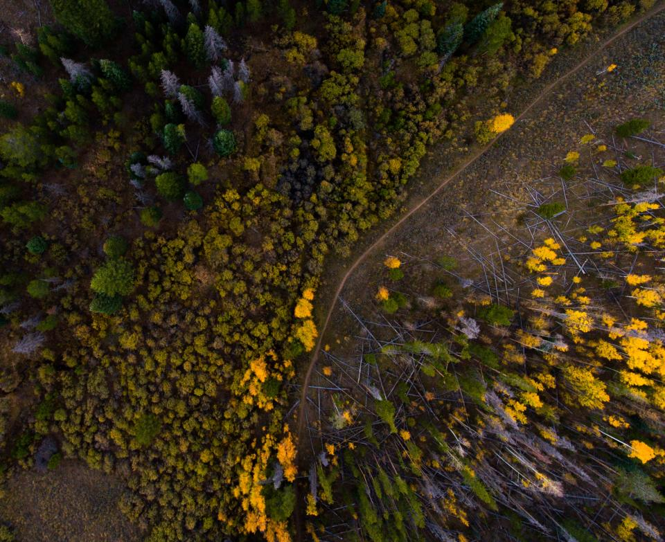 aerial woods forest travel adventure nature trees autumn fall summer