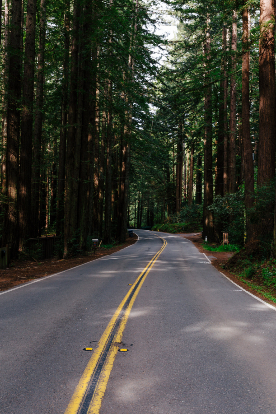 forest road travel trees nature outdoors pavement tall journey adventure vacation asphalt