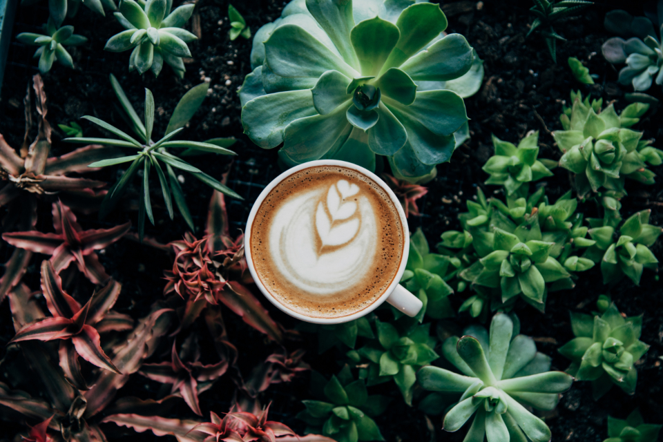 coffee house plant green home interior design inside nature food drink capuccino latte milk