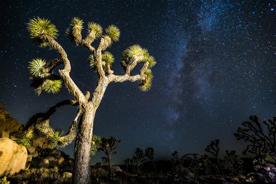joshua tree mikly way stars desert sky night galaxy