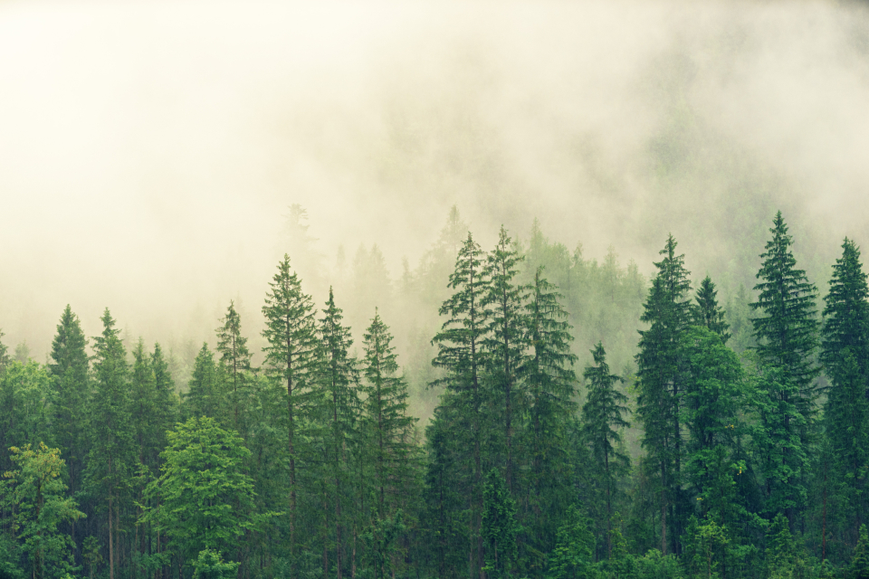 misty morning forest green mountain nature tall rain clouds view scenery