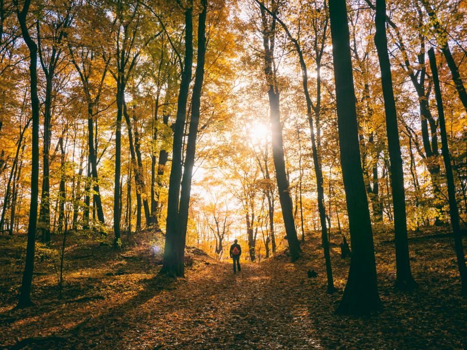 trees plant path autumn sunlight forest morning people man alone walking travel adventure outdoor