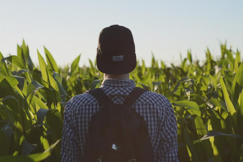 guy man male people back contemplate cornfield green crops style fashion travel trek sky