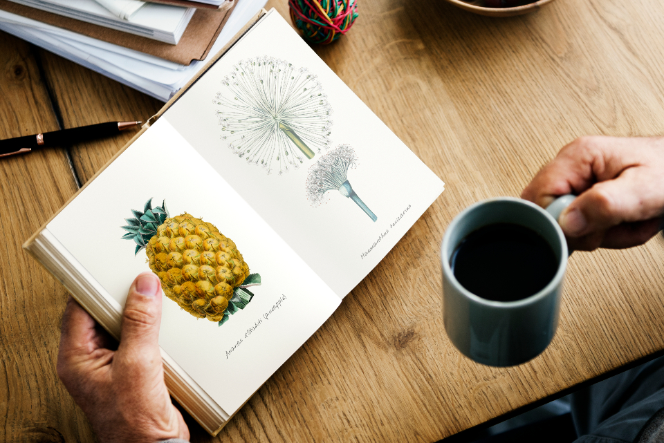 break time close up coffee cup drawing fiction hobby leisure novel open pages papers pineapple reading story wooden table