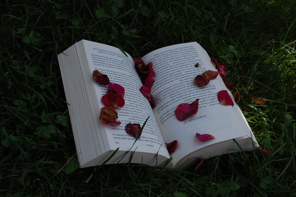book red petal nature open vintage grass outside