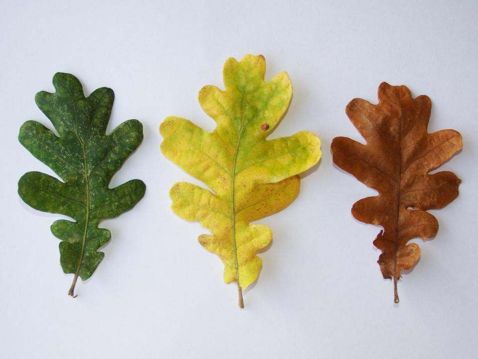 leaves fall autumn nature green yellow brown colors colours
