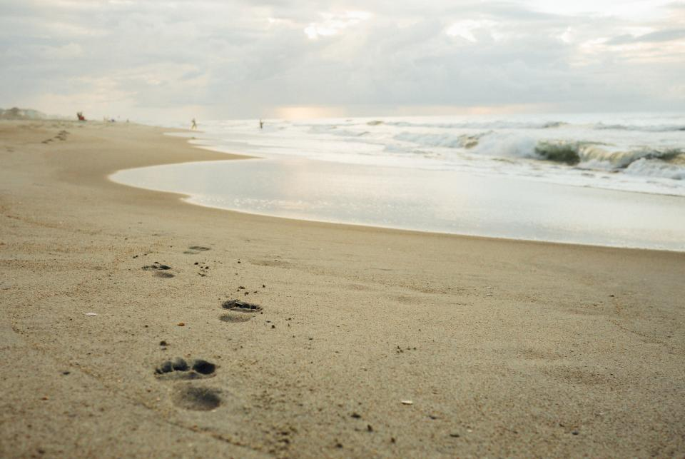 beach sand footprints shore ocean sea water waves
