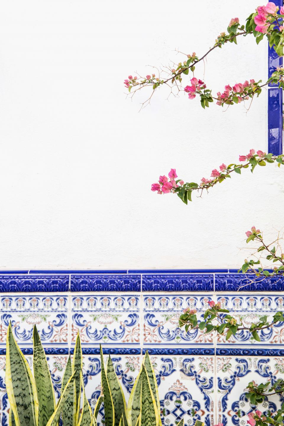 flower green leaf plant nature outdoor wall blue tiles