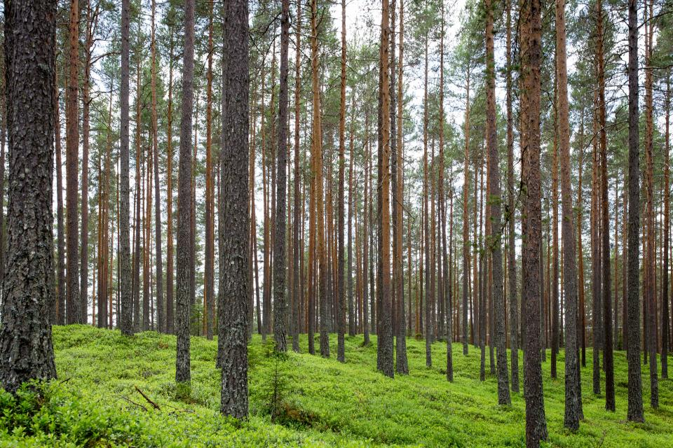 trees plants nature forest green grass landscape