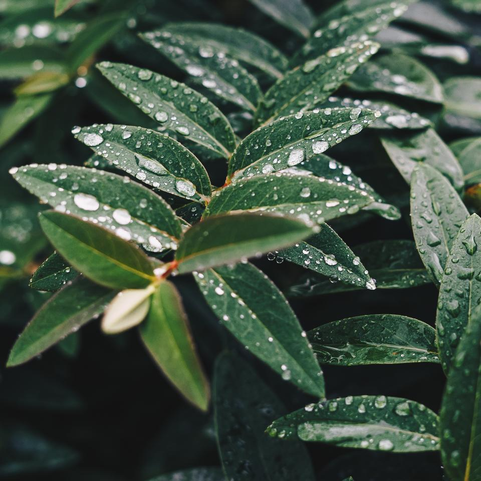 green leaf plant nature wet rain water drops