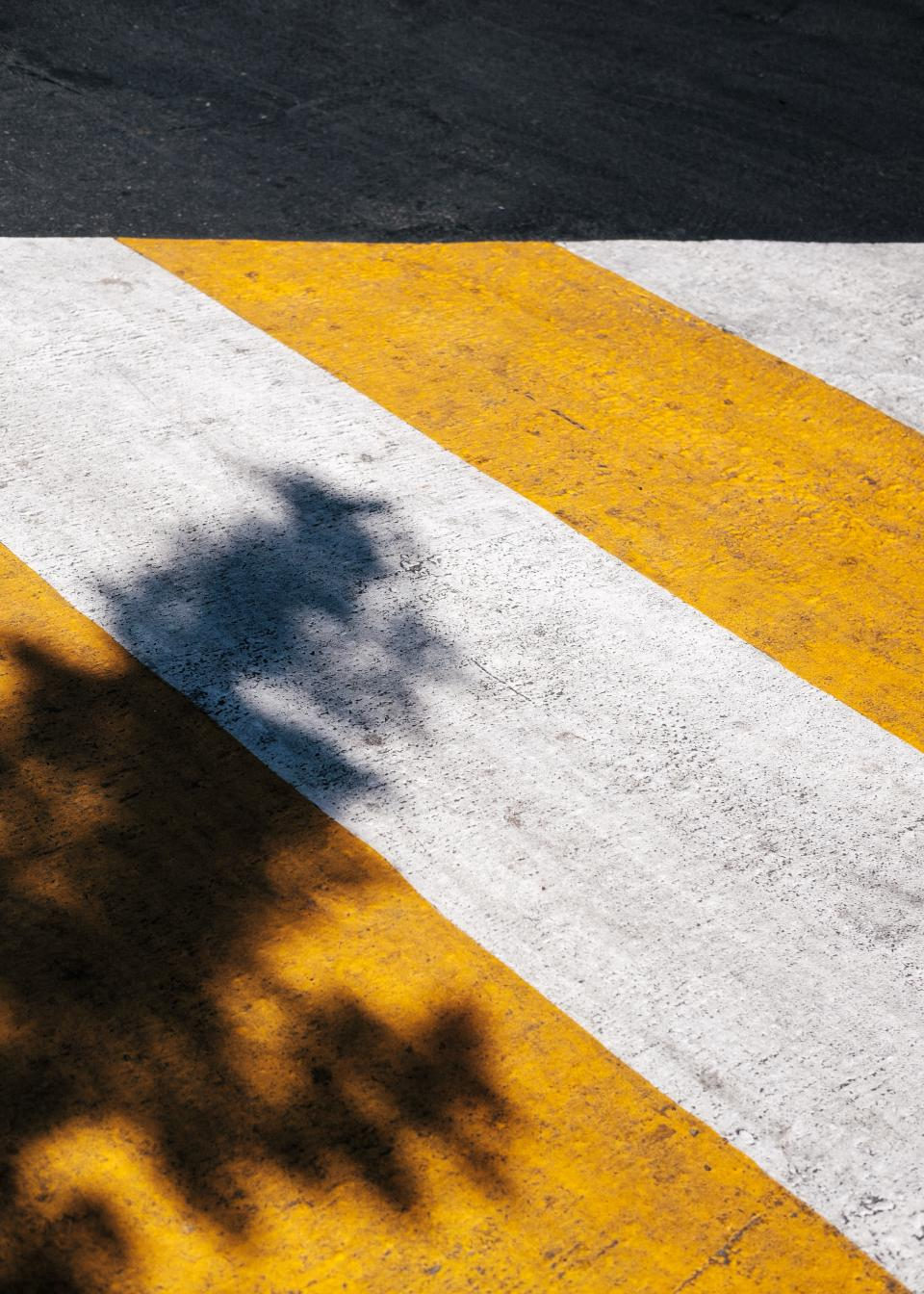 pedestrian lane shadow white yellow paint street tree road