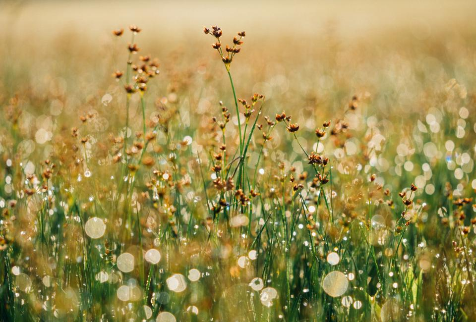 flowers plants grass field nature sunshine