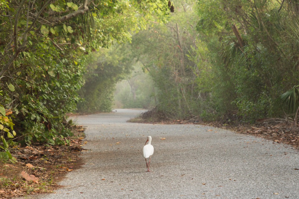 bird walking trail forest wood tree white duck goose feathers path enchanting