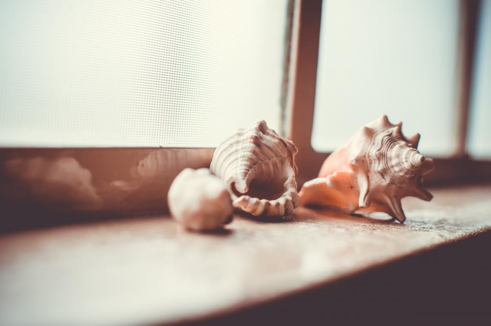 sea shells window sill objects decor