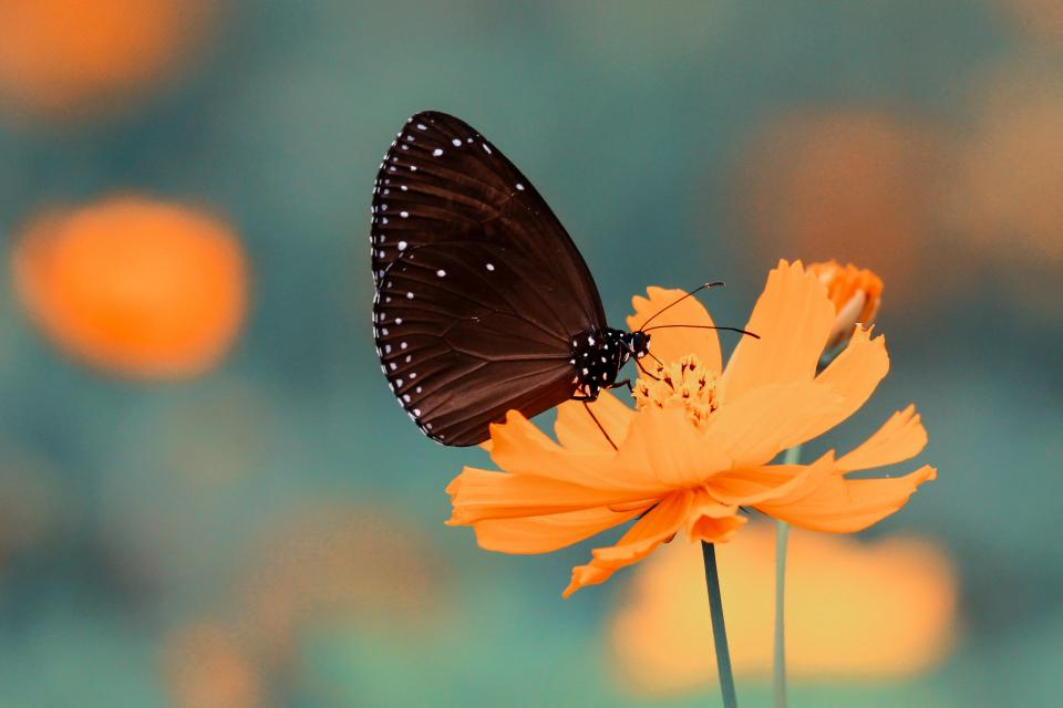 butterfly insect flower orange petals garden nature blur