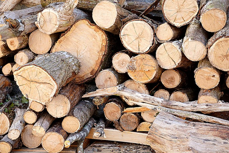 plants tree branch trunk cut fall stock pile logs woods dry brown