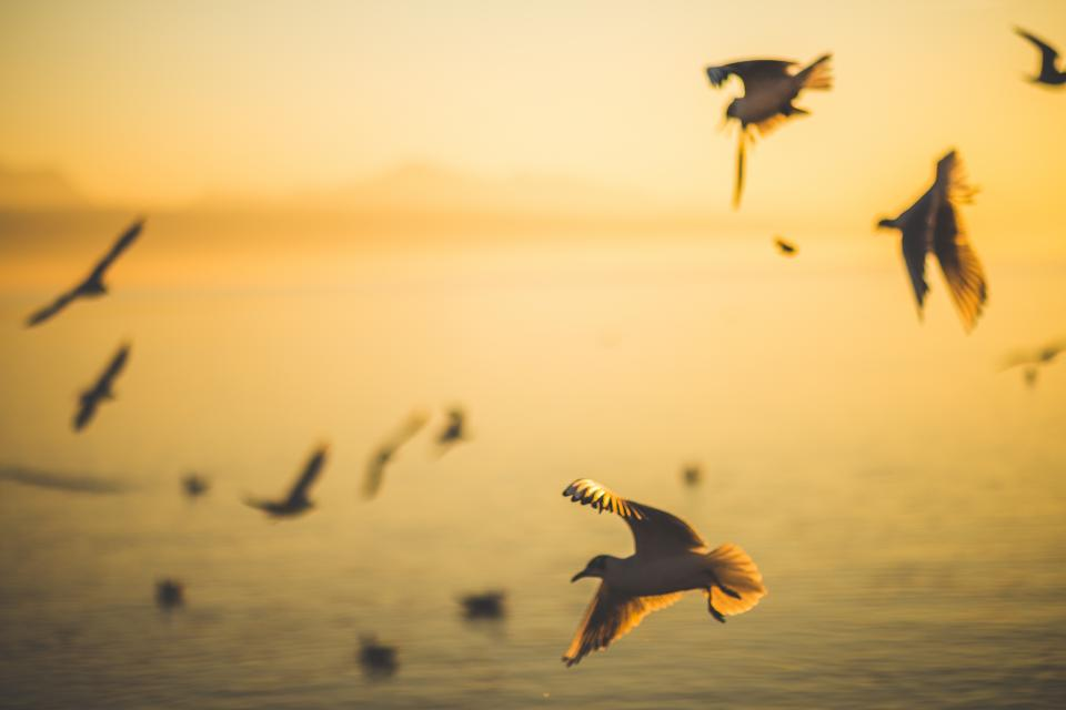 birds flying wings animals ocean sea sunset dusk group flock