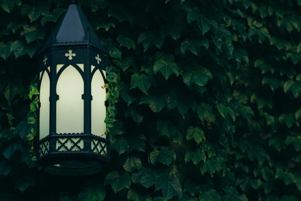 still items things decorative light lamp post scone leaves vines wall green
