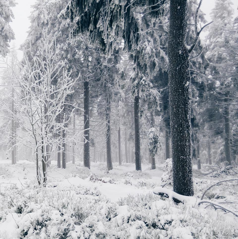 snow winter cold trees forest woods nature
