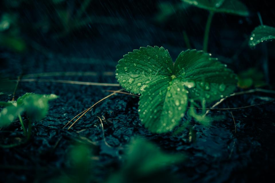 plant leaves green water rain forest woods floor