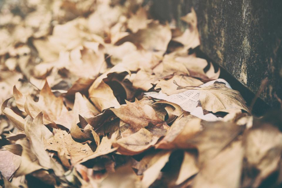 leaves dried autumn fall summer nature brown