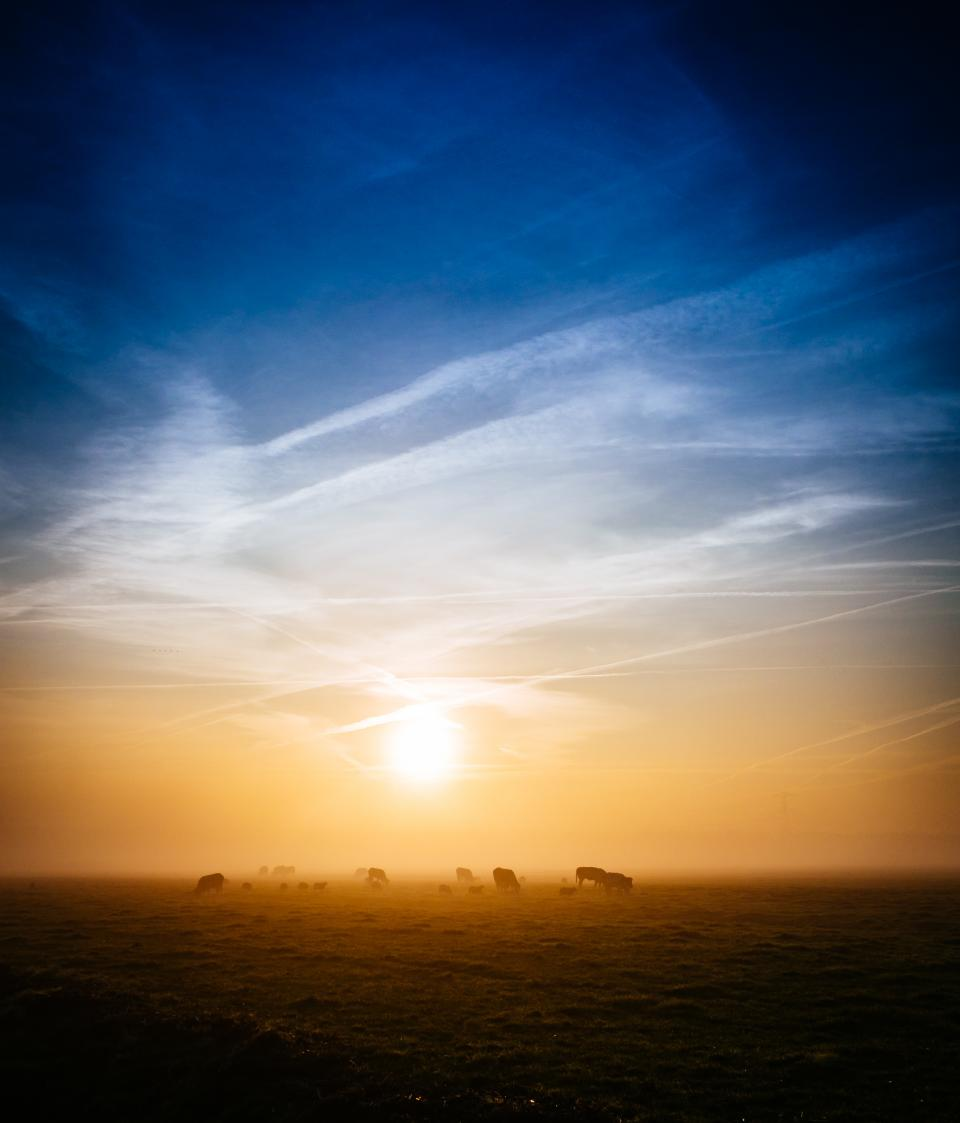 sunrise morning dawn field grass animals farm rural countryside sky clouds nature landscape