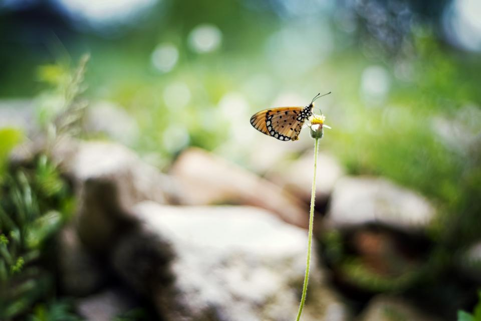 butterfly flower nature plant insect outdoor blur bokeh