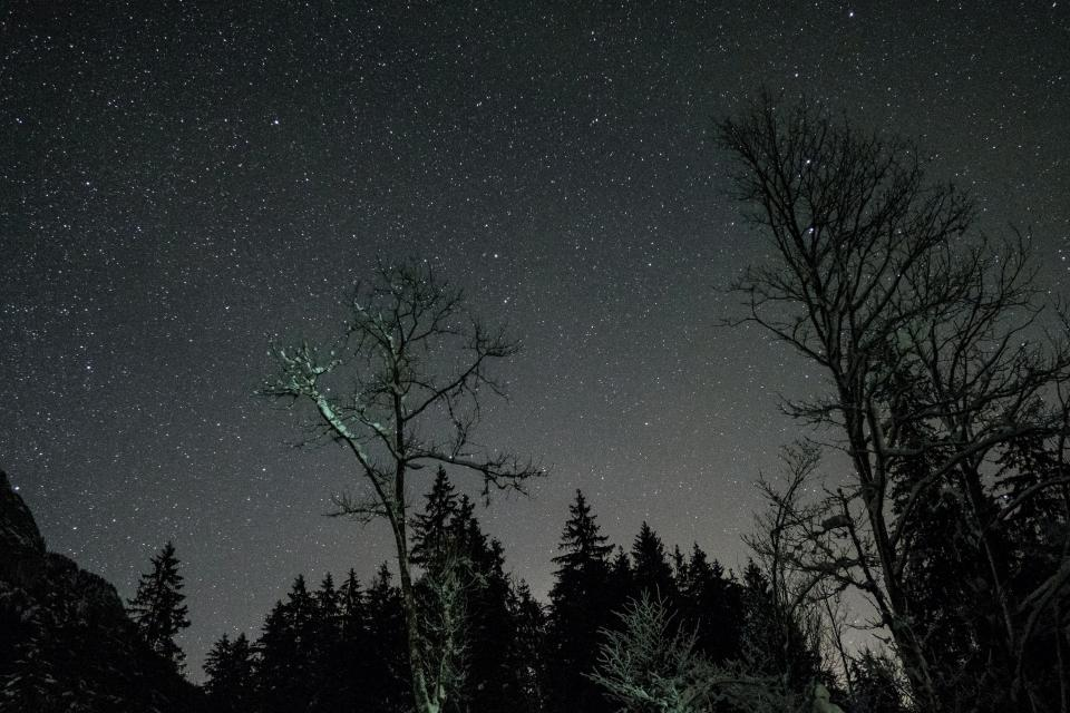 night dark astrophotography stars stargazing dark shadow trees woods forest