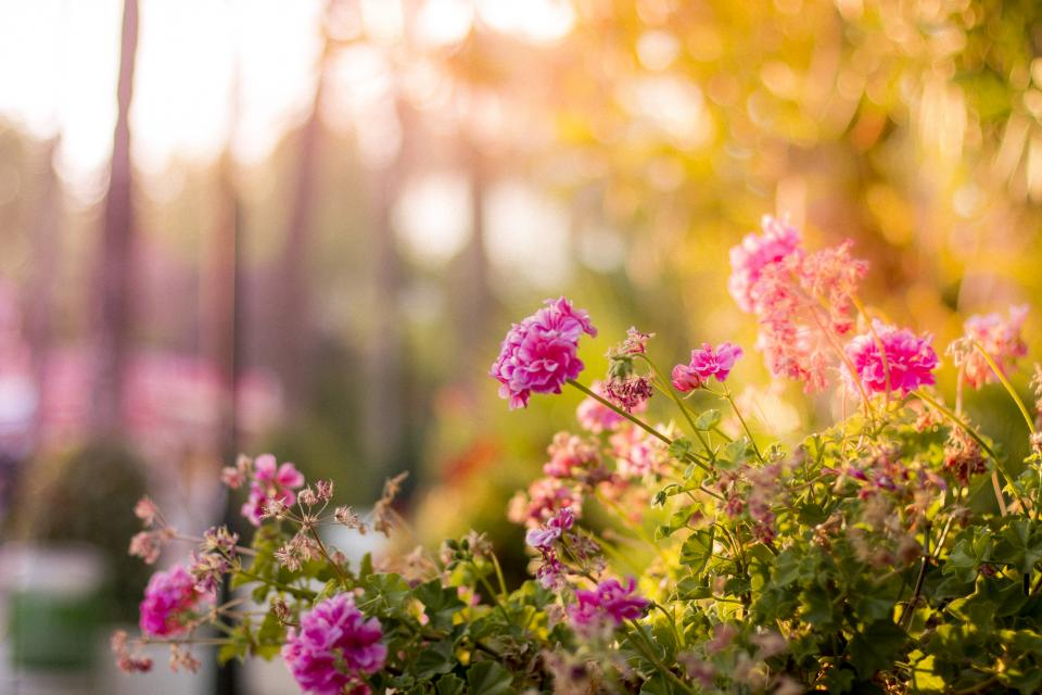flower bloom petal nature green leaf plant blur bokeh outdoor