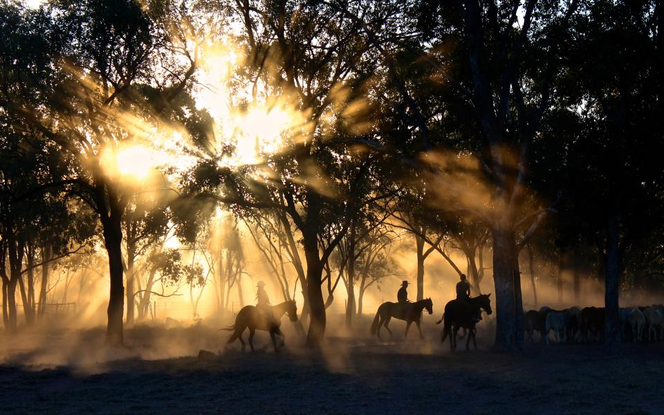 cowboy people men ride horse animal forest trees plants sunlight sunshine sunrise sunset dark
